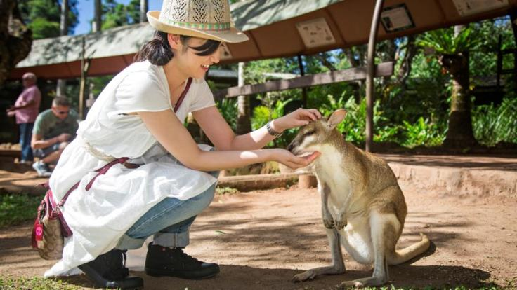 Meet the native wildlife at Kuranda Rainforestation Nature Park