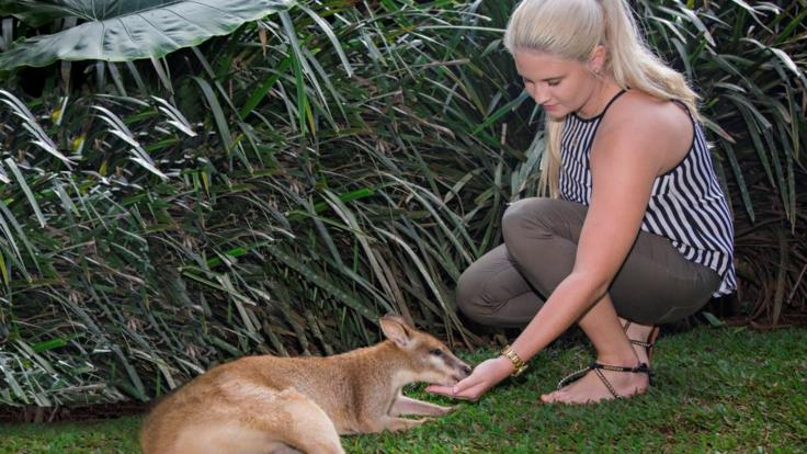 Hand feed the wallabies and kangaroos in the rainforest