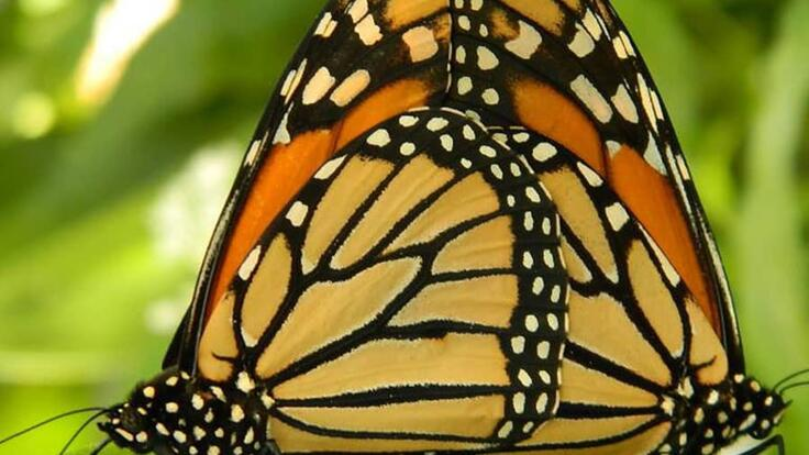 Kuranda Tours - Visit the Butterfly Sanctuary in Kuranda Village