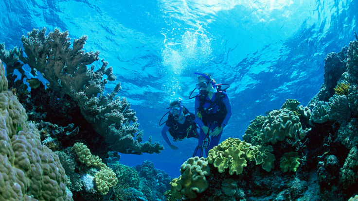 Scuba dive on the Great Barrier Reef