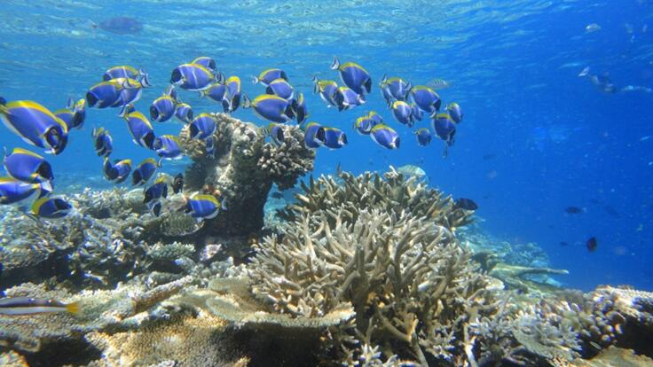 Cairns Snorkel Tour - Snorkel With Marine Life on the Great Barrier Reef