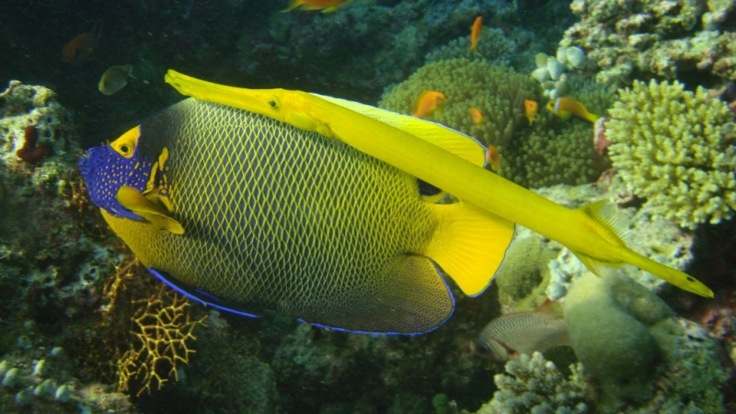 Discover the tropical reef fish on the Great Barrier Reef in Australia