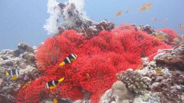 Colourful coral on the Great Barrier Reef
