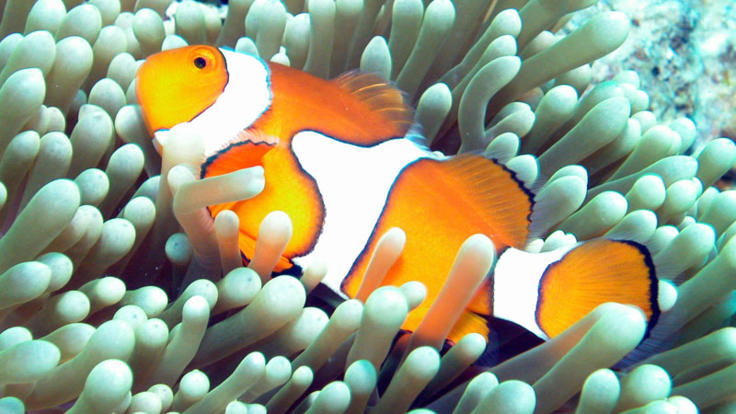 Reef Trip Cairns: See Nemo on the Outer Great Barrier Reef