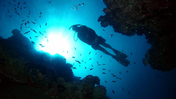 Explore the Great Barrier Reef with a scuba dive