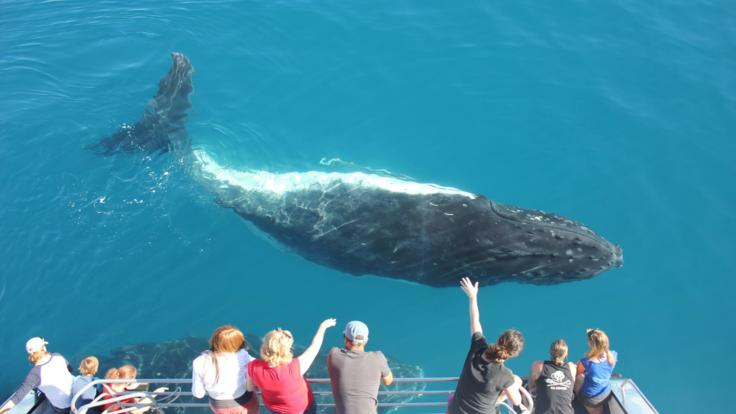 Whale watching tours Cairns - Fitzroy Island tours