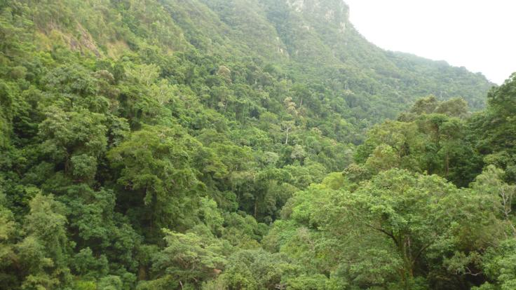 Stunning views over the Barron Gorge and rainforest
