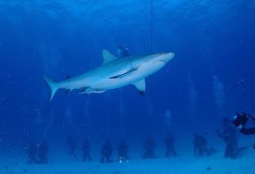 Private Charter Diving Trips with Sharks on the Great Barrier Reef