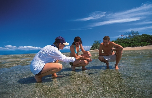Private Guided Snorkel Tour & Reef Interpretation | Private Low Isles Day Trip | Max 13 Guests