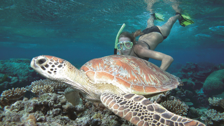 Take a swim with a sea turtle  - Great Barrier Reef Australia