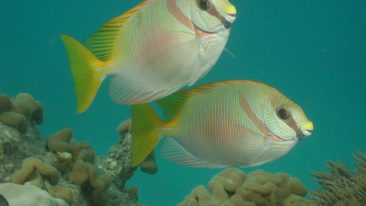Colourful fish on Great Barrier Reef