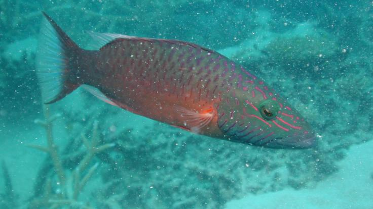 Huge variety of fish on Great Barrier Reef
