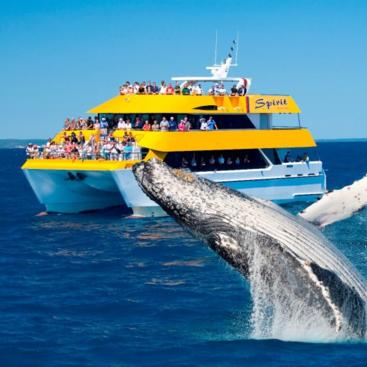 Spirit of Hervey Bay Half Day Whale Watching Cruise