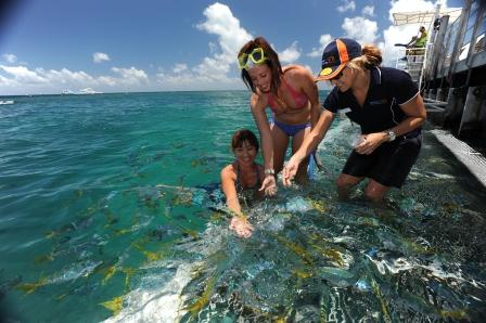 Feed the Fish on your Great Barrier Reef Tour