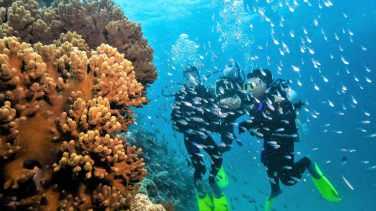 Scuba Diving On The Great Barreir Reef No Experience Necessary