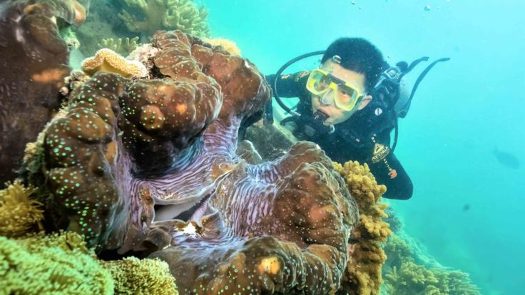 Scuba Diving On The Great Barrier Reef | Giant Clam
