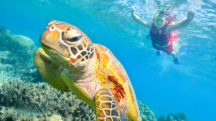 Snorkel with Turtles on the Great Barrier Reef
