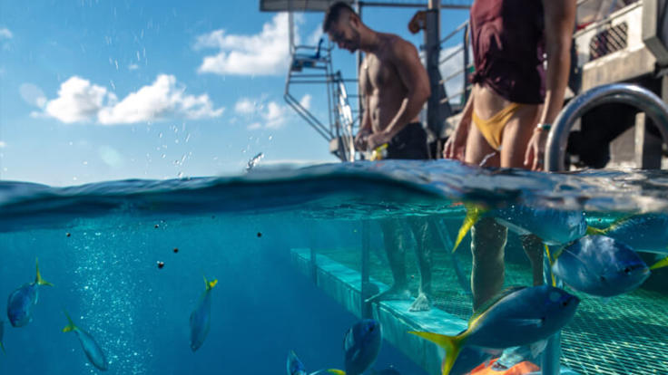 Easy access from the rear platform on the floating pontoon on the Great Barrier Reef