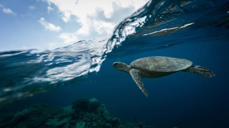 Dive and snorkel with turtles on the Great Barrier Reef in Australia