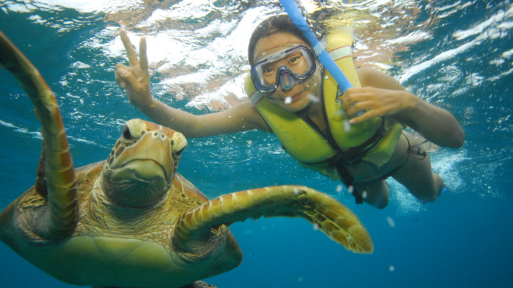 Swim with the Turtles on the Great Barrier Reef