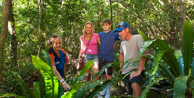 Self-guided rainforest walk on Fitzroy Island