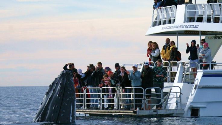 Hervey Bay Whale Watching Tours - Little Tassie Whale Viewing Platform