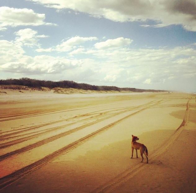 Fraser Island: Fraser Island 4WD Day Tour
