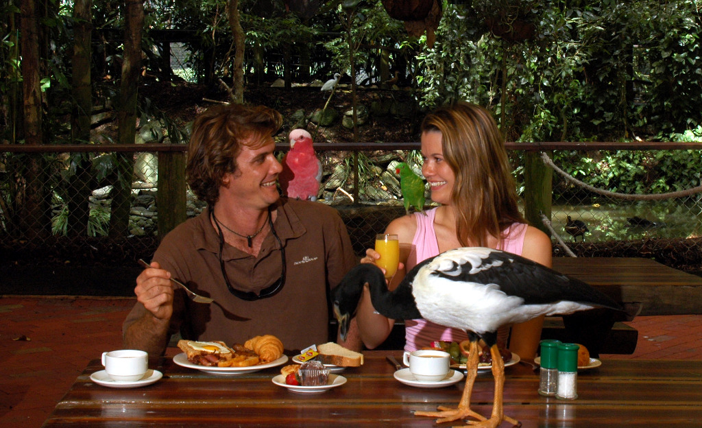 Breakfast With the Birds, The Wildlife Habitat Port Douglas