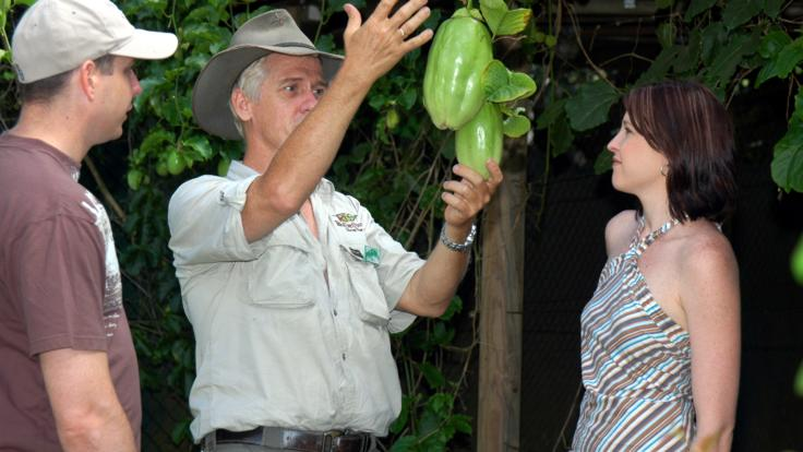 Exotic fruit trees in Kuranda