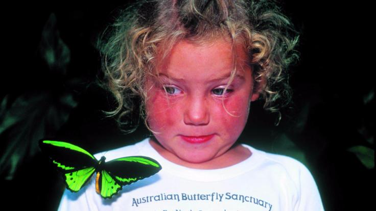 Kids Love The Australian Butterfly Sanctuary in Kuranda
