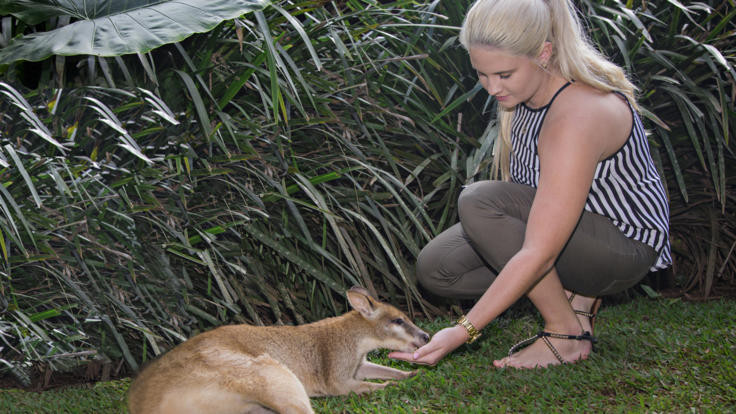 Pet a wallaby at Rainforestation Nature Park in Kuranda
