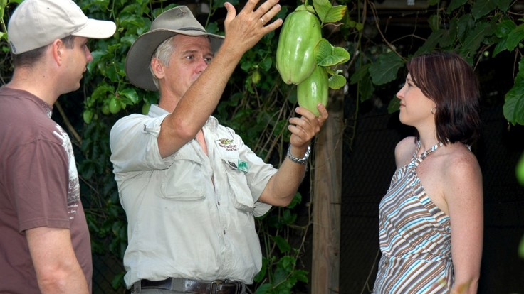 Learn all about the tropical fruits at Rainforestation