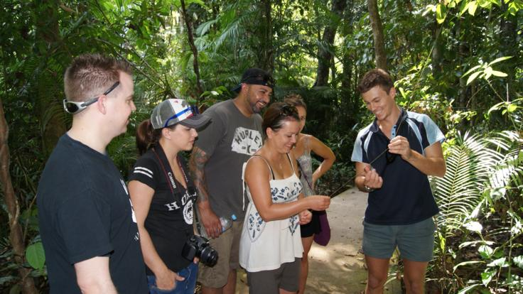 Eco guided walks thru the Cape Tribulation Rainforest