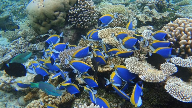Take an optional snorkel safari on the Great Barrier Reef