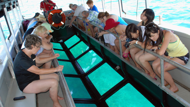 View the coral reef below in a glass bottom boat