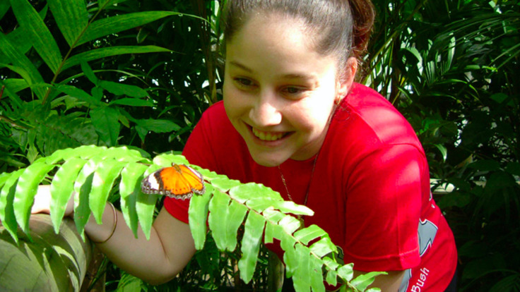Stunning butterflies and birds in Kuranda