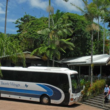 Comfortable coaches for accommodation transfers and travel to Rainforestation from Kuranda