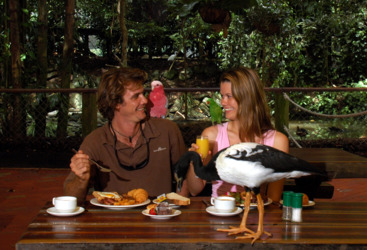 Breakfast with the birds at the Port Douglas Wildlife Habitat