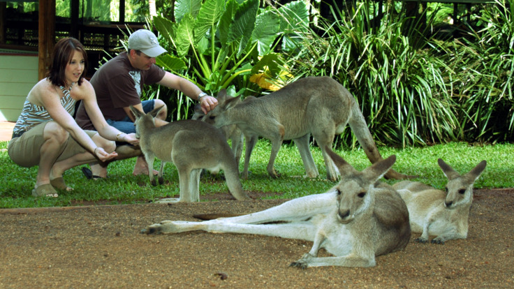 Hand feed Kangaroos & Wallabies in Kuranda