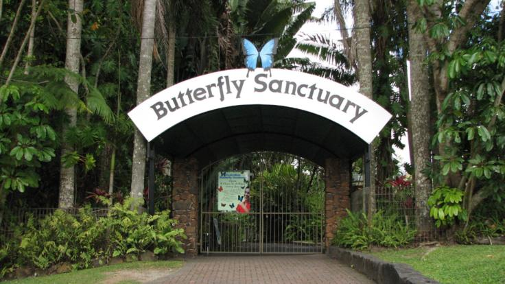 The Australian Butterfly Sanctuary in Kuranda