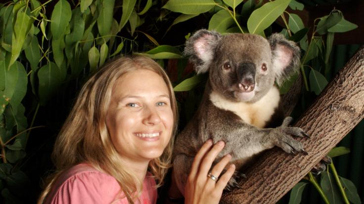 Have your photo taken with a koala in the Kuranda Rainforest