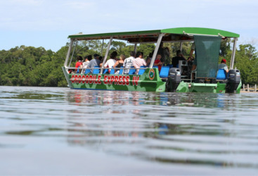 Daintree River Cruise - see a crocodile in the wild