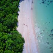 The famous tropical Cape Tribulation beach