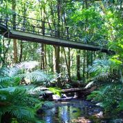 Walkways thru the rainforest in Mossman Gorge