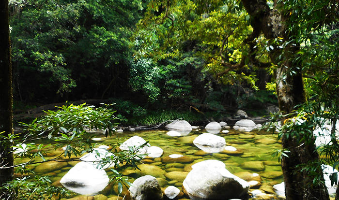 Mossman Gorge in the Daintree Rainforest