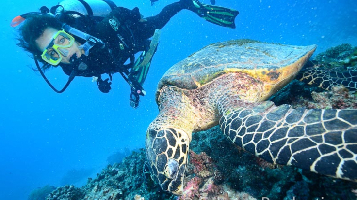Dive with Sea Turtles on the Outer Great Barrier Reef from Cairns
