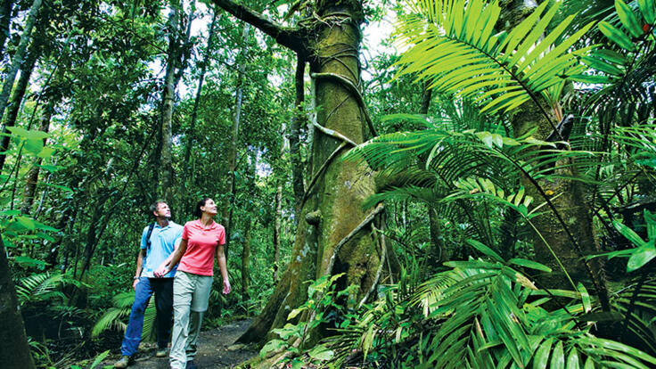 Take a walking tour thr the rainforest at night in Cairns
