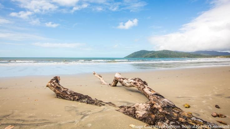 Walkabout Cape Tribulation coastline with an Aboriginal guide