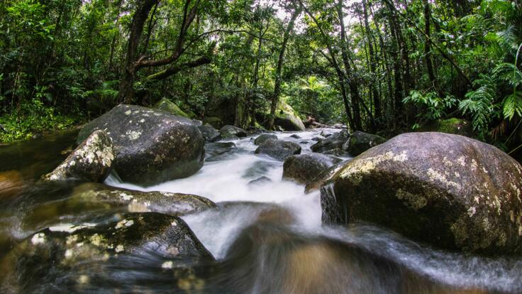 See amazing freshwater creeks in the Daintree Rainforest
