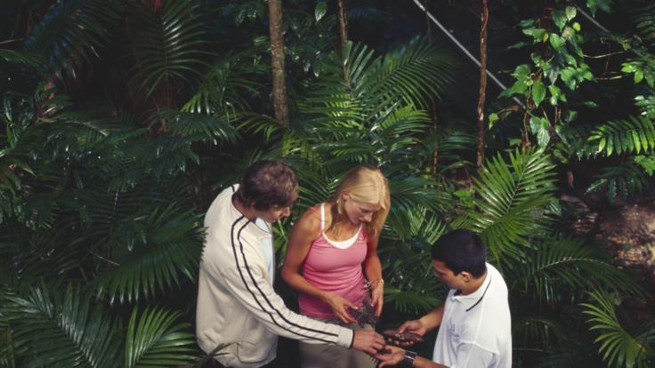 Learn all about the Daintree bush medicines and bush foods from your Aboriginal guide